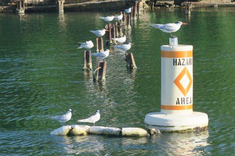 Celebración del día de los humedales con censo de aves