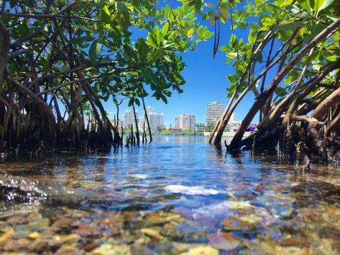 Celebrando los manglares