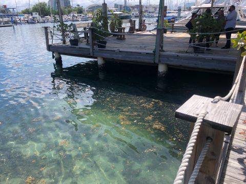 Descubre los BioHUTS del Estuario