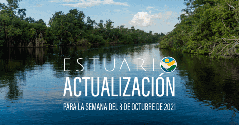 Actualización por parte del Equipo del Estuario (semana 4-8 de octubre de 2021)